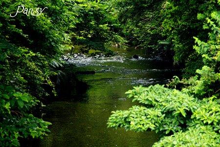 緑に染まる川・・