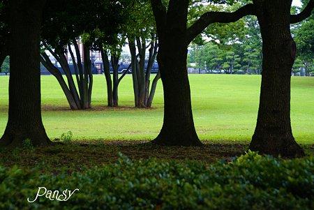 朝のグリーン・・