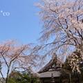 写真: 鎌倉-316