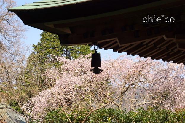 写真: 鎌倉-318