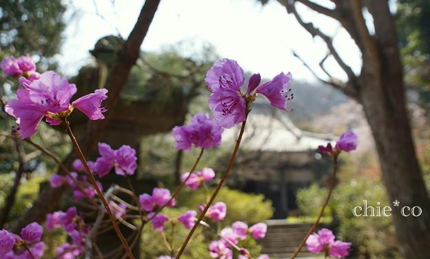 写真: 鎌倉-334