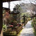 写真: 鎌倉-338