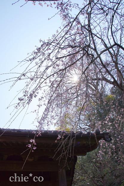 写真: 鎌倉-339