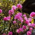 写真: 鎌倉-341