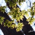 写真: 鎌倉-360