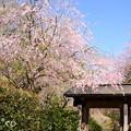 写真: 北鎌倉-390