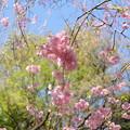 写真: 北鎌倉-395