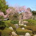 写真: 北鎌倉-399