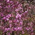 写真: 北鎌倉-422