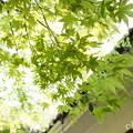 写真: 北鎌倉-427