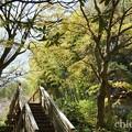 写真: 北鎌倉-434