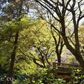 写真: 北鎌倉-436