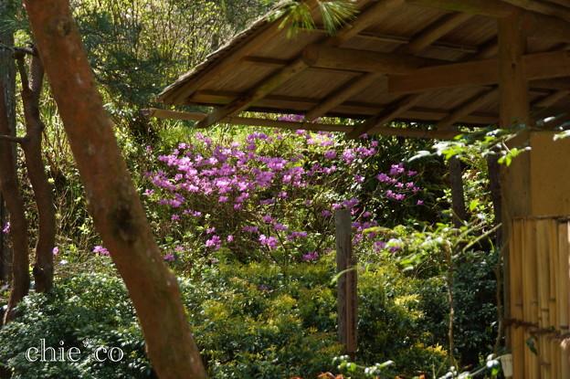 写真: 北鎌倉-438