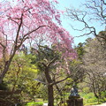 写真: 北鎌倉-442
