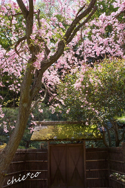 写真: 北鎌倉-447