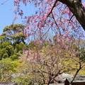写真: 北鎌倉-451
