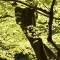 写真: 北鎌倉-453