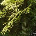 写真: 北鎌倉-460