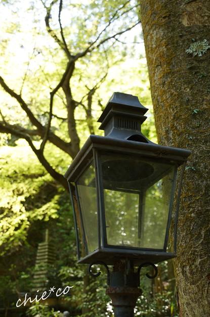 写真: 北鎌倉-461