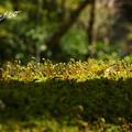 写真: 北鎌倉-464