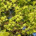 写真: 北鎌倉-465