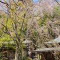 写真: 北鎌倉-474
