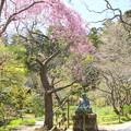 写真: 北鎌倉-476