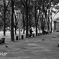 Photos: 公園・・