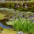 写真: 那須桧扇菖蒲(なすひおうぎあやめ)の咲く池。。