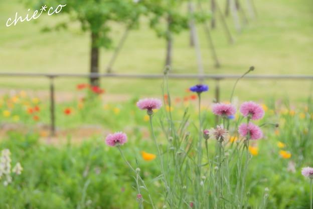 写真: 花菜ガーデン-206