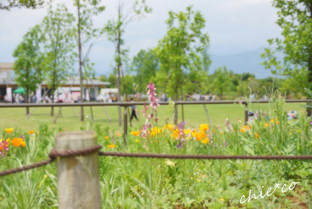 花菜ガーデン-209