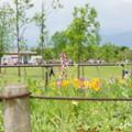写真: 花菜ガーデン-209