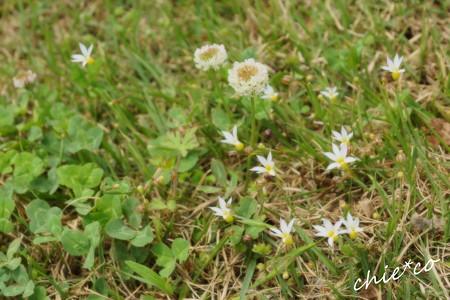 花菜ガーデン-210
