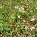 写真: 花菜ガーデン-210