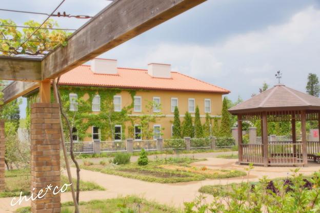 写真: 花菜ガーデン-213