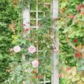 写真: 花菜ガーデン-216