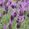 写真: 花菜ガーデン-226