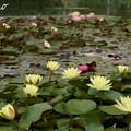 写真: 花菜ガーデン-241