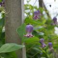 写真: 花菜ガーデン-245