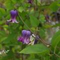 写真: 花菜ガーデン-247
