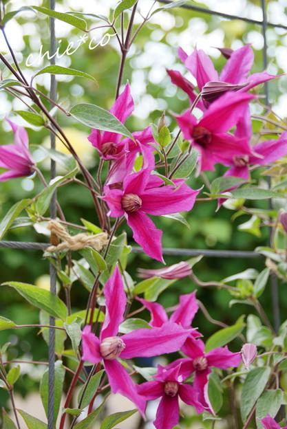 写真: 花菜ガーデン-251