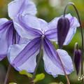 写真: 花菜ガーデン-252
