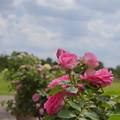 写真: 花菜ガーデン-255