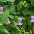 写真: 花菜ガーデン-259