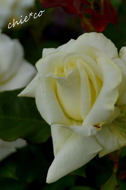 写真: 花菜ガーデン-261