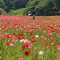 写真: くりはま花の国-284