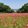 写真: くりはま花の国-287