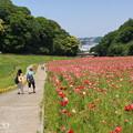 写真: くりはま花の国-288