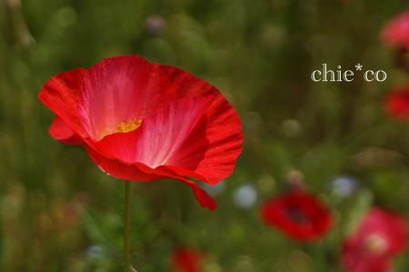くりはま花の国-291