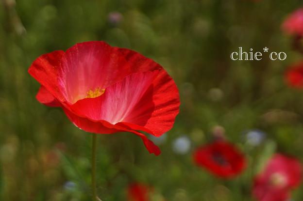 写真: くりはま花の国-291